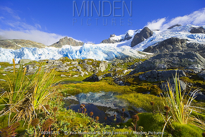 Blue glacier receding and small tarn or pond, on green and golden tundra slope, with grasses, lichen, moss, rocks and erratic boulders, fall morning, Salversen Range, Smaaland Cove, South Georgia Island, Southern Ocean, Antarctic Convergence  -  Yva Momatiuk & John Eastcott