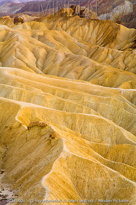 Colorful badlands in the dunes, multicolored layers of sedimentary rocks, water eroded canyons and mountains which encompasses 3.4 million acres of famous wilderness, Zabriskie Point, Death Valley National Park, California  -  Yva Momatiuk & John Eastcott