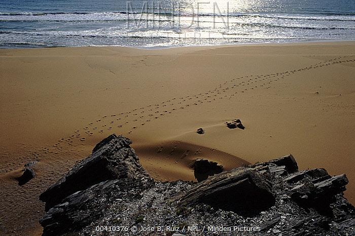 Tracks in the sand, Calblanque, Murcia, Spain  -  Jose B. Ruiz/ npl