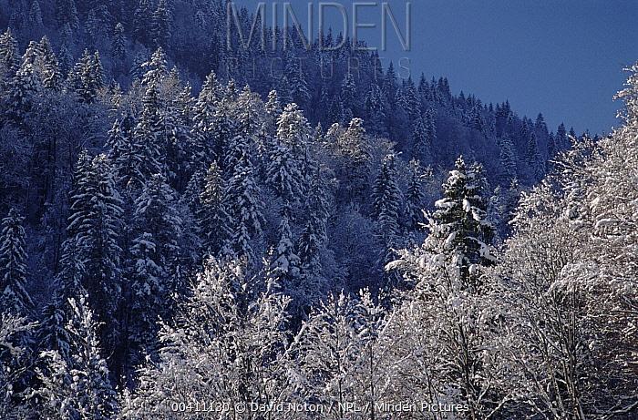 The Alps in winter, near Garmisch, Germany  -  David Noton/ npl