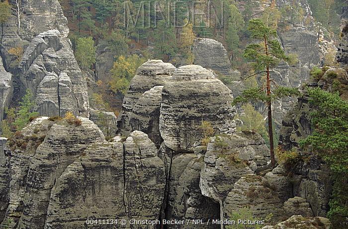 Elbe Sandstone Mountains, Saxony, Germany  -  Christoph Becker/ npl