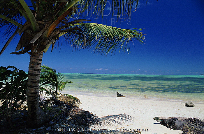 Tropical beach, Pigeon Point, Tobago  -  Nigel Bean/ npl