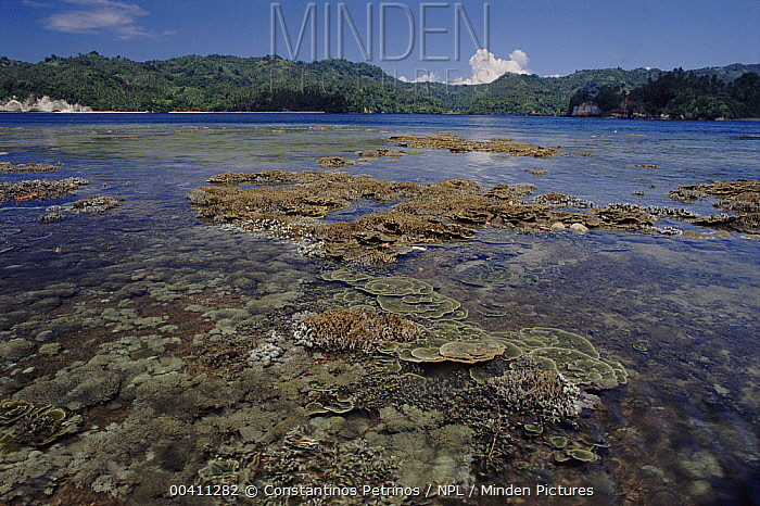 Coral reef at low tide with exposed corals, Sulawesi, Indonesia  -  Constantinos Petrinos/ npl