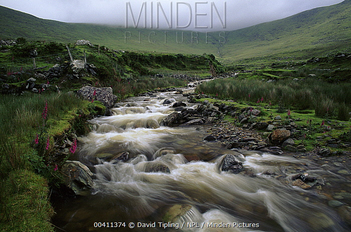 River through the moor in the Ring of Kerry, Kerry, Ireland, Europe  -  David Tipling/ npl