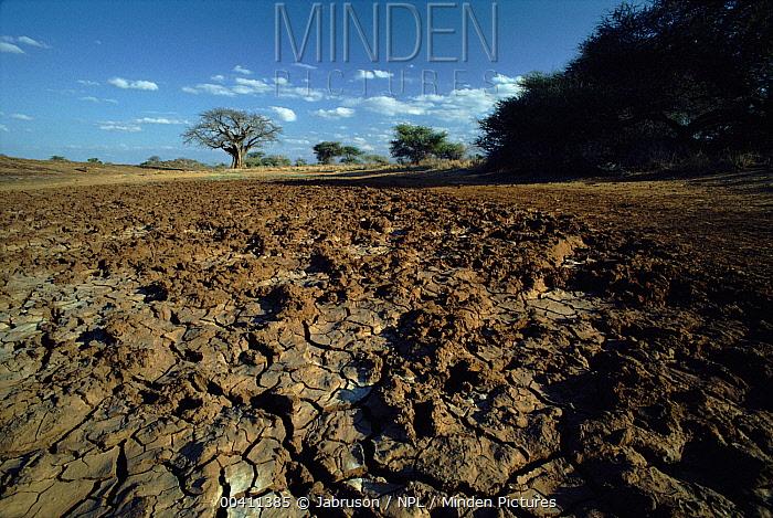 Drying mud at drought-stricken waterhole, height of dry season, Tsavo East National Park, Kenya.3 of 3  -  Jabruson/ npl