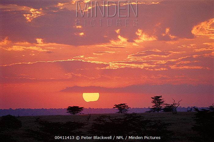 Sunset on the savannah, Kenya  -  Peter Blackwell/ npl