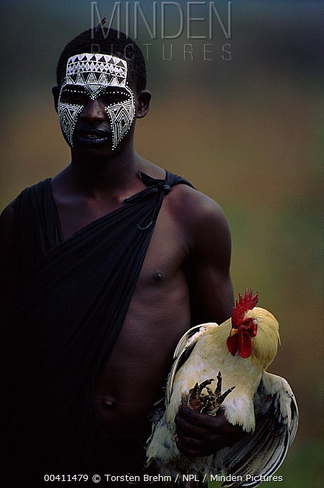 Young Masai man holding rooster at market. Serengeti National Park, Tanzania  -  Torsten Brehm/ npl