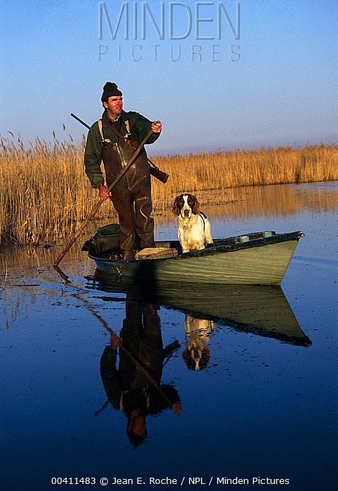 Duck hunter in boat with dog, Camargue, France  -  Jean E. Roche/ npl