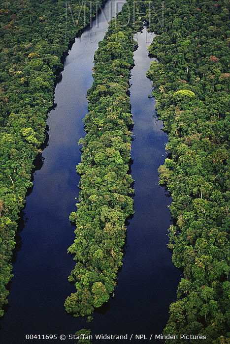 Aerial of Amazon tropical rainforest, with river tributary, Manaus, Brazil  -  Staffan Widstrand/ npl