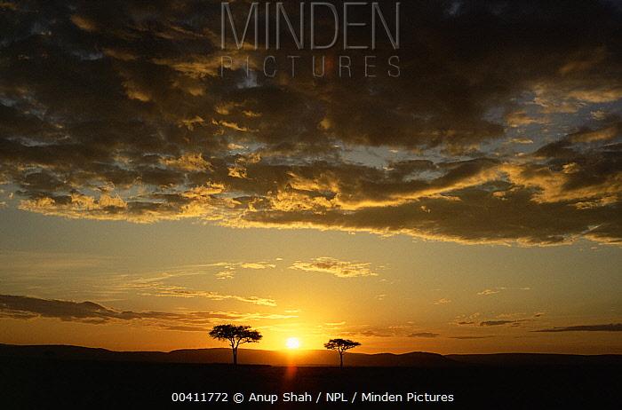 Sunset over savanna, Masai Mara National Reserve, Kenya  -  Anup Shah/ npl