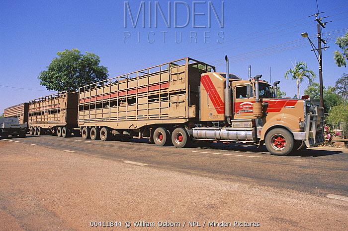 Road train cattle transporter Mataranka, Northern Territory, Australia  -  William Osborn/ npl