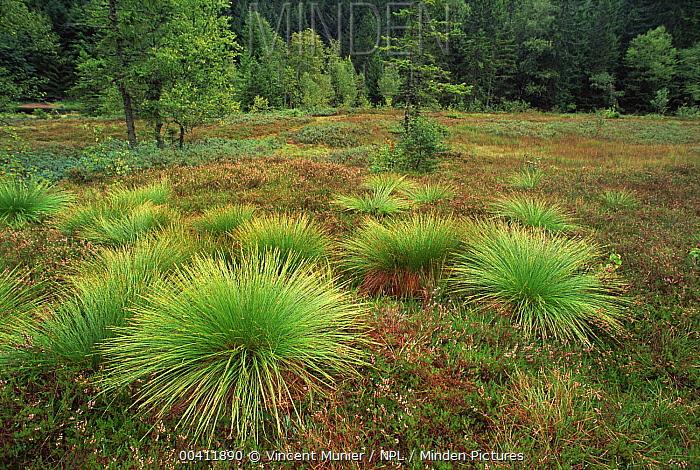 Marsh landscape, Vosges France  -  Vincent Munier/ npl