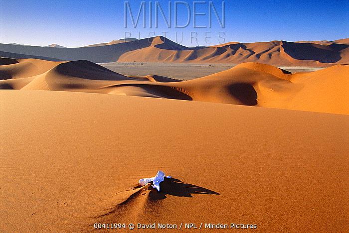 Gemsbok (Oryx gazella) bone, Namib Desert, Namib-Naukluft National Park, Namibia  -  David Noton/ npl