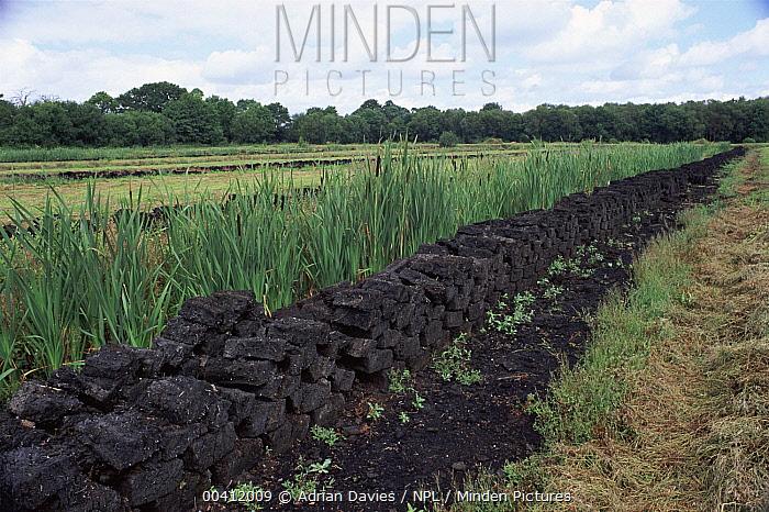 Peat cutting Somerset levels, England  -  Adrian Davies/ npl
