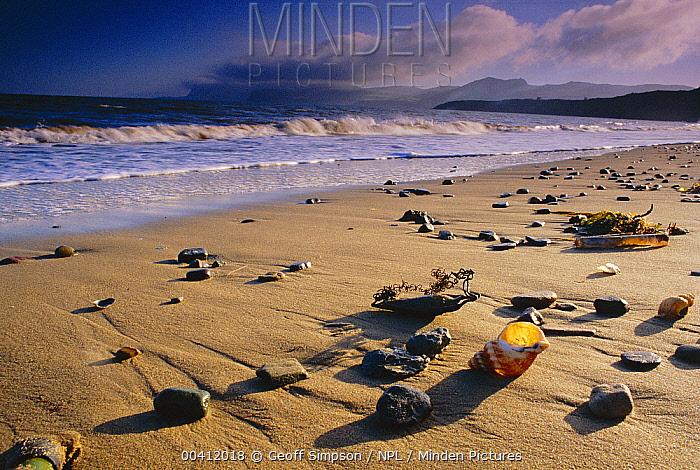 Beach at low tide with shells and pebbles, Porth Dinllaen, Gwynedd, Wales, United Kingdom  -  Geoff Simpson/ npl