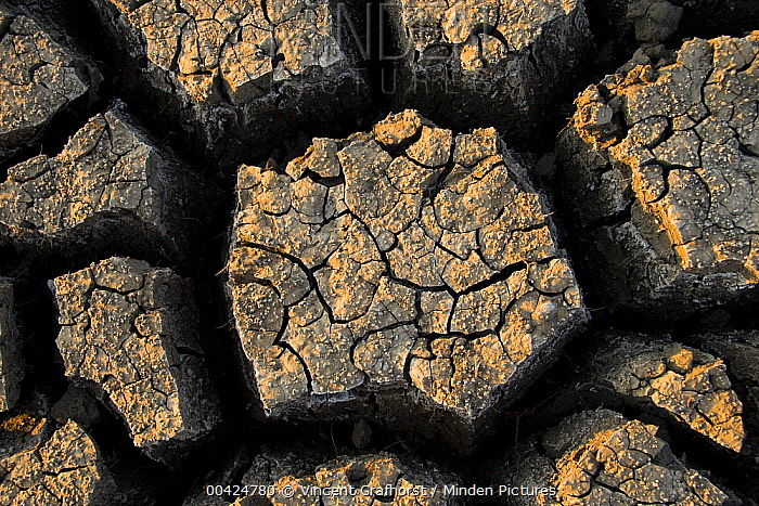 Cracked, dried out mud, Mokolodi Nature Reserve, Botswana  -  Vincent Grafhorst