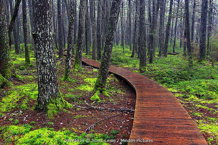Boardwalk in old-growth forest, Kejimkujik National Park, Nova Scotia, Canada  -  Scott Leslie