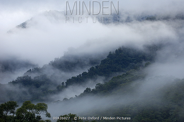 Cloud forest, Maquipucuna Nature Reserve, Ecuador  -  Pete Oxford