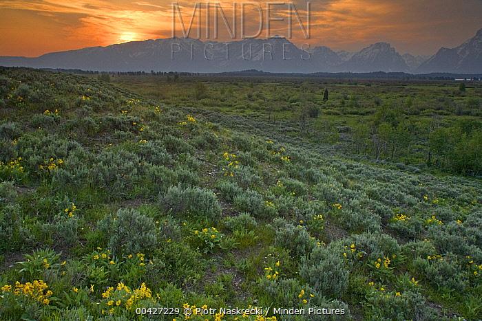 Sunset over sagebrush meadow, Grand Teton National Park, Wyoming  -  Piotr Naskrecki