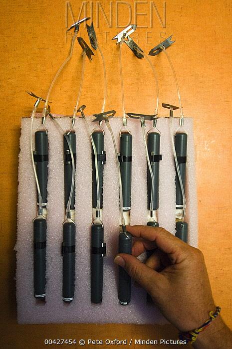 Ultrasonic tags for sharks, Wolf Island, Galapagos Islands, Ecuador  -  Pete Oxford