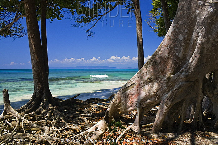 Coastal rainforest, Havelock Island, India  -  Konrad Wothe