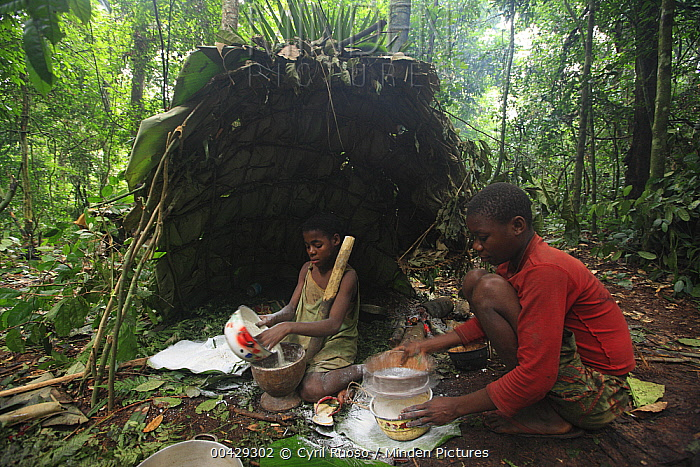 Baka boys in forest hunting camp at Mongolu shelter, Cameroon  -  Cyril Ruoso