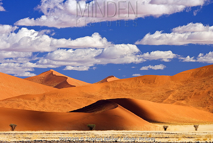 Sand dunes, Namib-Naukluft National Park, Namibia  -  Stephen Belcher