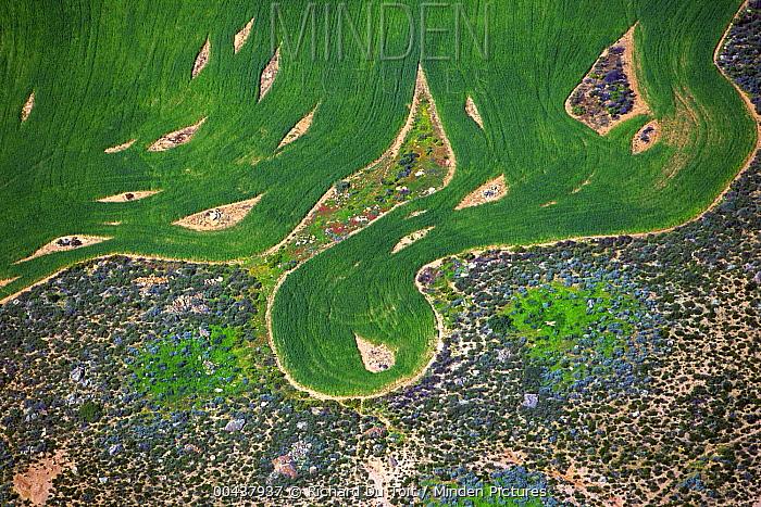Wheat field patterns, Swartland, South Africa