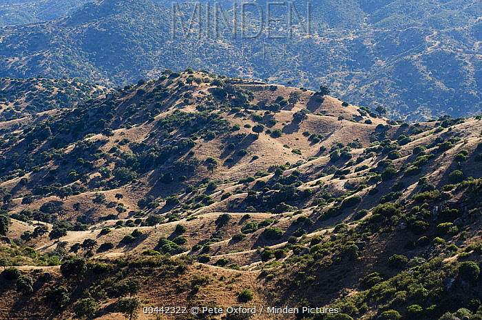 Mediterranean woodland of Sierra Morena, Sierra de Andujar Natural Park, Andalusia, Spain  -  Pete Oxford