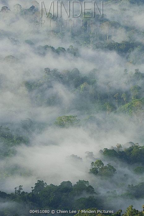 Rainforest canopy with mist at dawn, Gunung Penrissen, Borneo, Malaysia  -  Ch'ien Lee