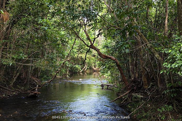 Myall Creek in rainforest, Daintree National Park, North Queensland, Queensland, Australia  -  Konrad Wothe