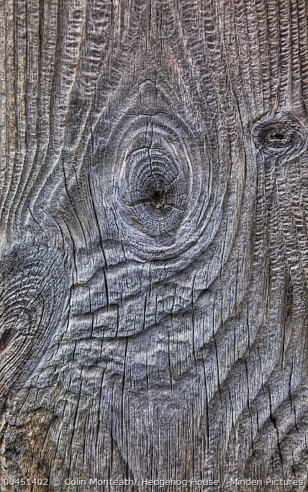 Wind eroded wood, Deception Island, South Shetland Islands, Antarctica  -  Colin Monteath/ Hedgehog House