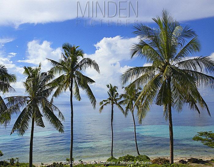 Coconut Palm (Cocos nucifera) trees, Bikini Beach, Panglao Island, Philippines  -  Tim Fitzharris