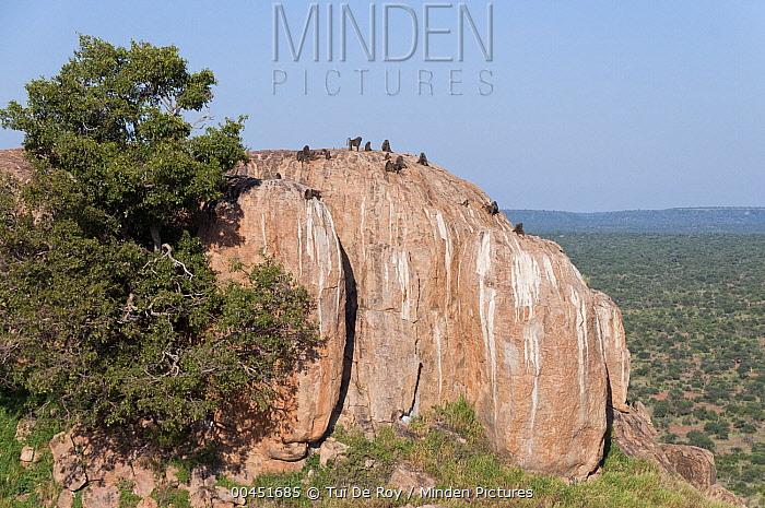 Plateau and highlands, Laikipia, Kenya  -  Tui De Roy