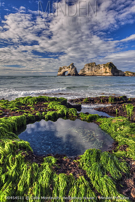 Tidepool in seaweed covered rocks, Archway Islands behind, Wharariki Beach near Collingwood, Golden Bay, New Zealand  -  Colin Monteath/ Hedgehog House