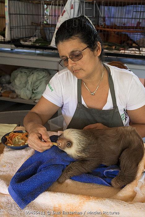 Hoffmann's Two-toed Sloth (Choloepus hoffmanni) orphaned baby fed by caretaker Xinia Villegas, Aviarios Sloth Sanctuary, Costa Rica  -  Suzi Eszterhas