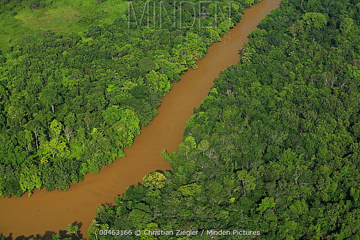 River silted by erosion due to deforestation for oil palm plantations, Niah National Park, Sarawak, Malaysia  -  Christian Ziegler