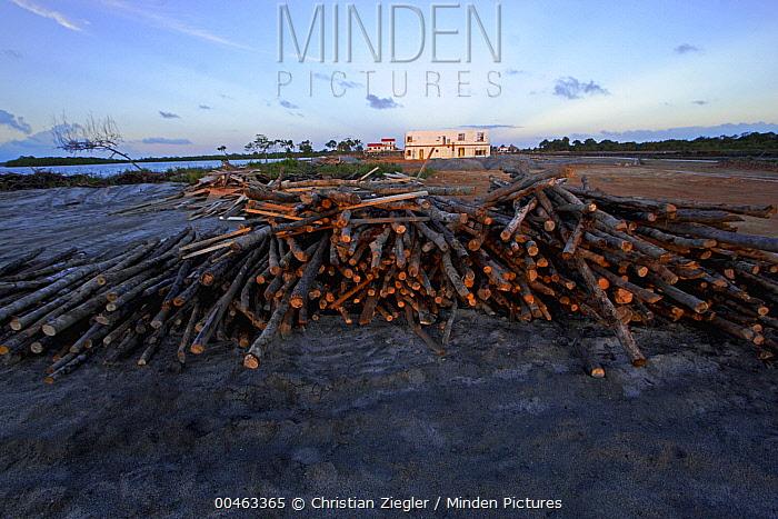 Red Mangrove (Rhizophora mangle) trunks, Hopkins, Belize  -  Christian Ziegler