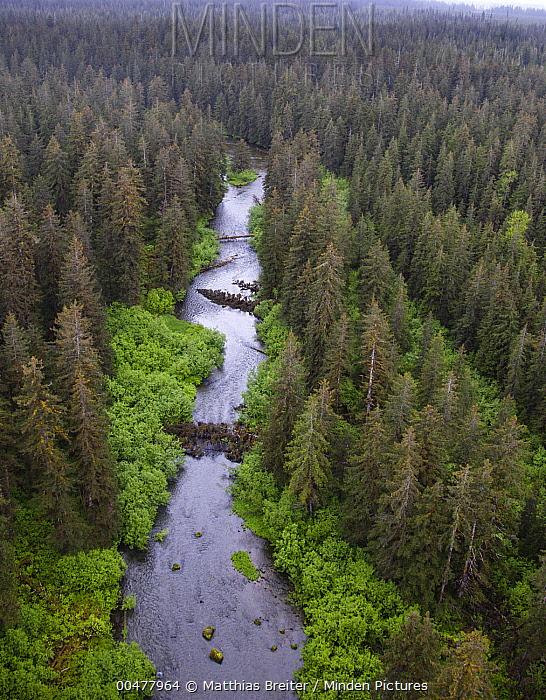 Stream and boreal forest, Tongass National Forest, Yakutat, Alaska  -  Matthias Breiter