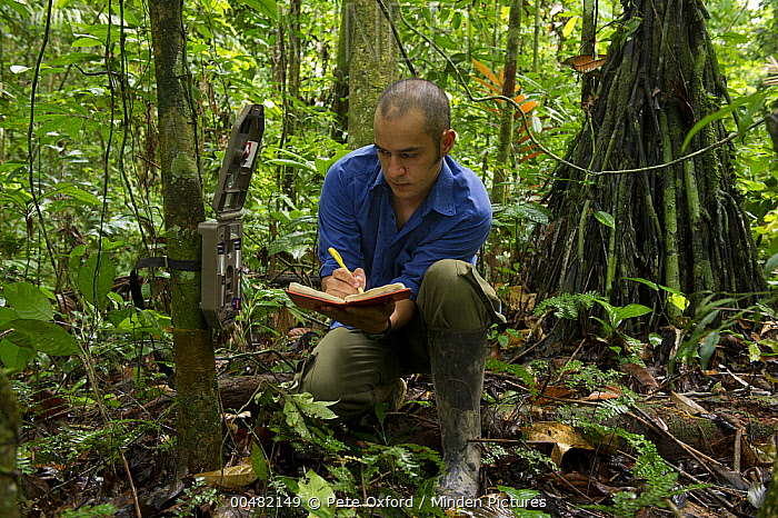 Researcher Diego Mosquera recording data from camera traps used to study large mammals, Yasuni National Park, Amazon, Ecuador  -  Pete Oxford