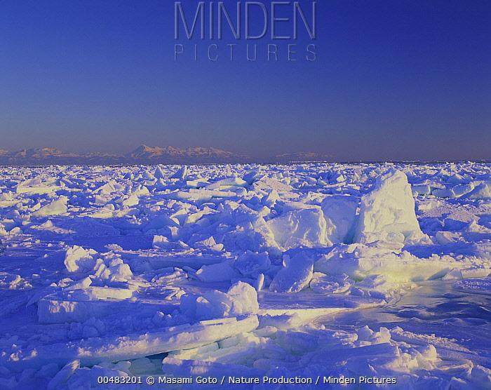 Drift ice at Shiretoko, Hokkaido, Japan  -  Masami Goto/ Nature Production