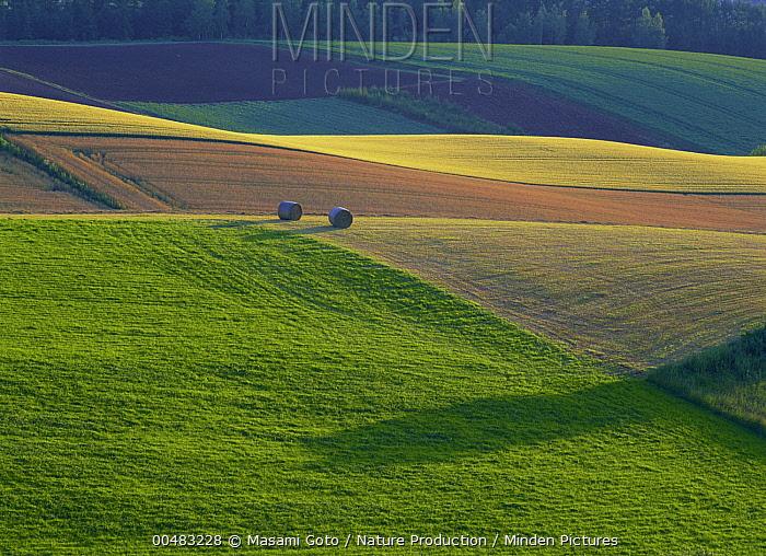 Agricultural field, Hokkaido, Japan  -  Masami Goto/ Nature Production