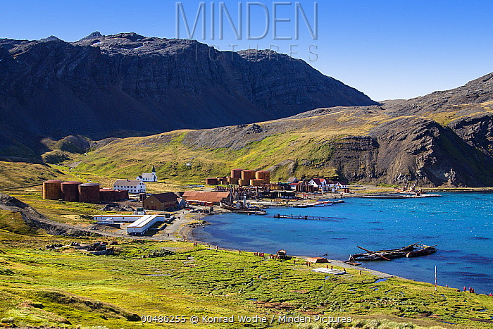 Former whaling station Grytviken, King Edward Cove, South Georgia Island  -  Konrad Wothe