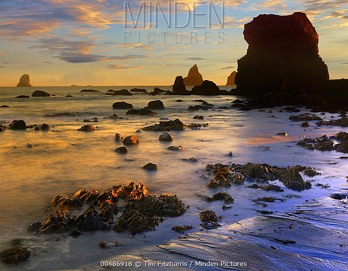 Seastacks, Lone Ranch Beach, Oregon  -  Tim Fitzharris