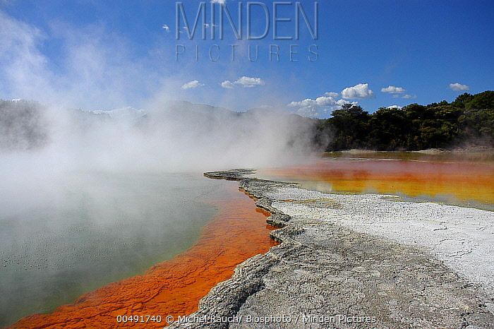 Champagne Pool, a volcanic lake has constant 74 degree Celsius water including minerals gold, silver mercury, sulphur, and arsenic, Wai-O-Tapu Thermal Wonderland, New Zealand  -  Michel Rauch/ Biosphoto