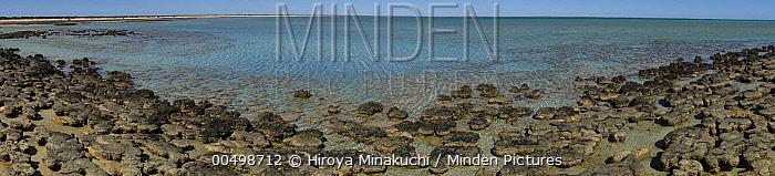 Stromatolites, colonies of blue-green algae, the oldest life form that still exists today, over three billion years old, Hamelin Pool, Shark Bay, Western Australia  -  Hiroya Minakuchi