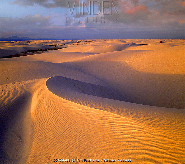 Sand dunes, White Sands National Monument, New Mexico  -  Tim Fitzharris