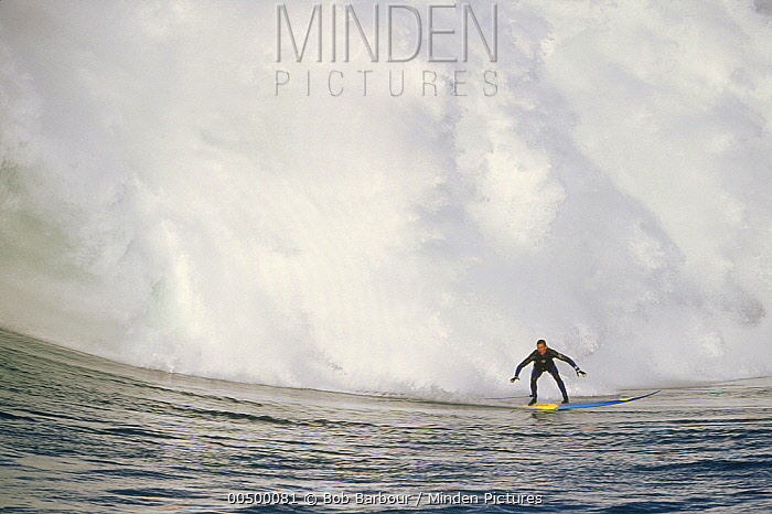 Minden Pictures stock photos - Jay Moriarity, Mavericks