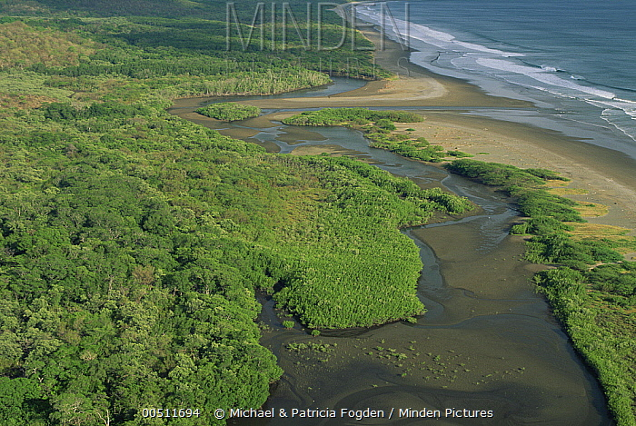 Estero Real and Playa Naranjo, known as a Sea Turtle nesting beach, Santa Rosa National Park, Costa Rica  -  Michael & Patricia Fogden