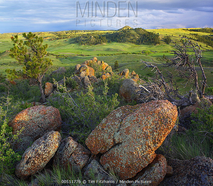 Rocks and grassland, Medicine Bow-Routt National Forest, Wyoming  -  Tim Fitzharris